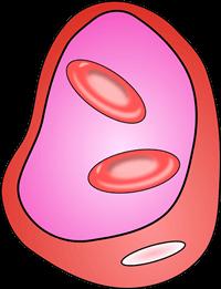 血管のイメージ